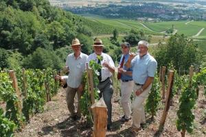 Weinbaubereisung des Regierungspräsidenten  Dr. Paul Beinhofer Geschichtsweinberg Iphofen